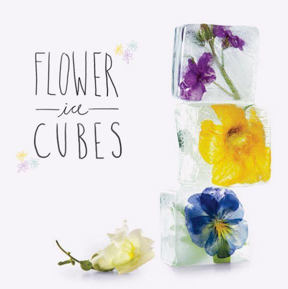 Cubos de gelo com flores e frutas