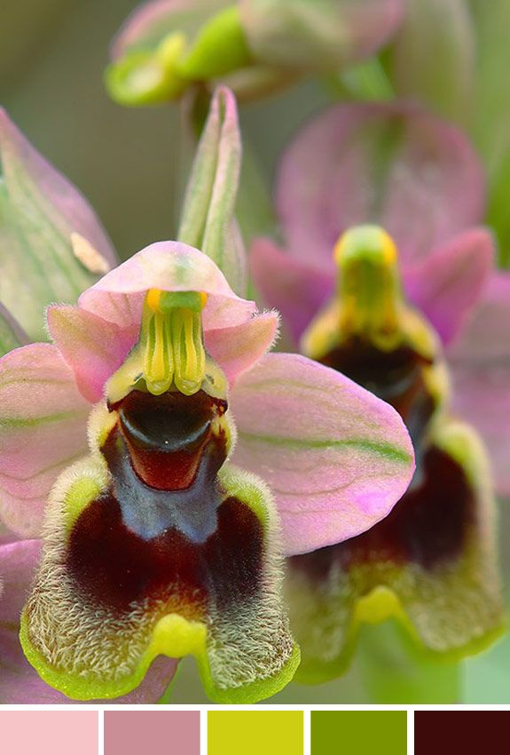 Inspiração do dia: orquídea